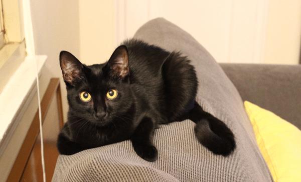 bella the kitten