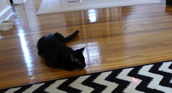 cat chasing lazer