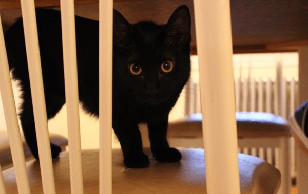 kitten in kitchen