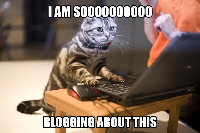cat blogger