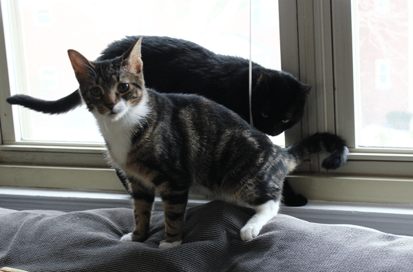 2 cats on a window